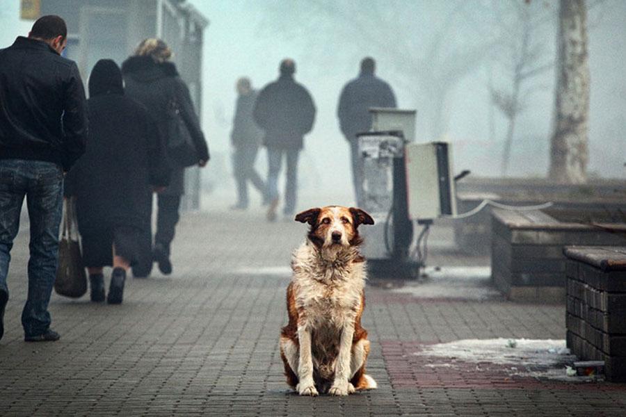 Простые люди часто не понимают всю глубину проблемы бездомных животных