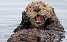 Adopt a Sea Otter   Symbolic Adoptions from WWF