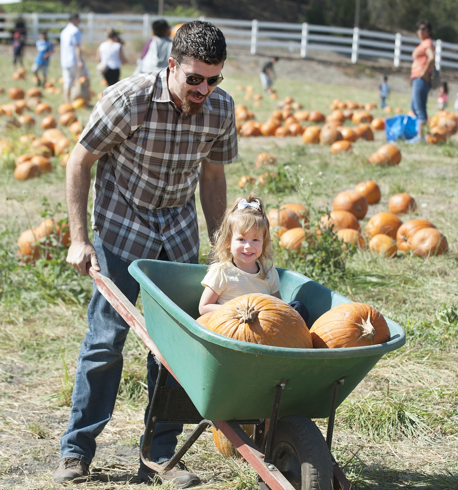 Man pushing little girl and pumpkins in a barrel