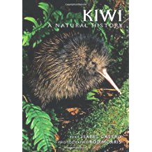 New Zealand - Kiwi bird