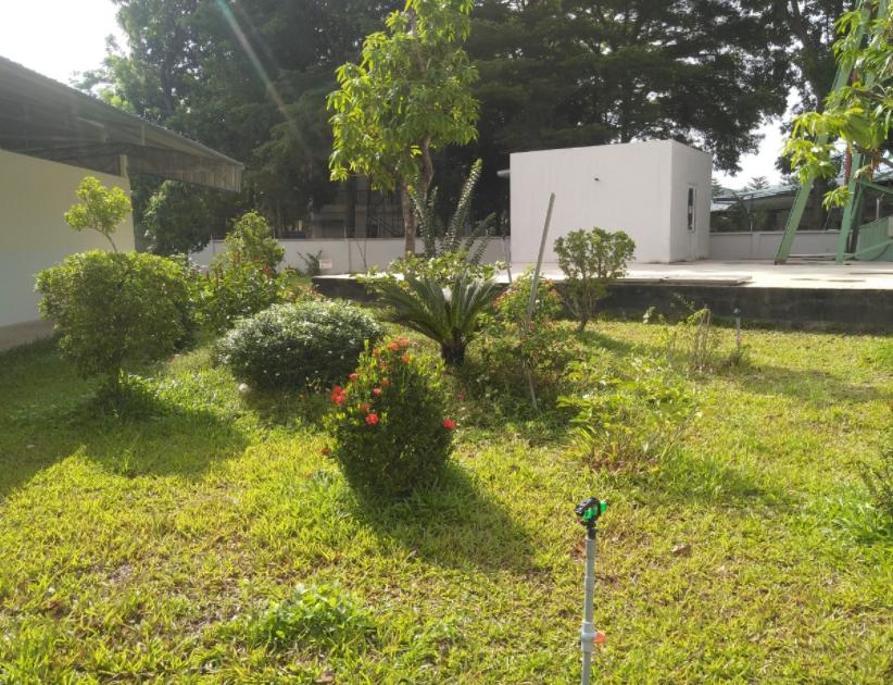 Cây Xanh Miền Nam là đơn vị cắt tỉa cây với giá thành ưu đãi nhất