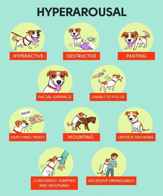 Afbeeldingsresultaat voor hyperarousal dog