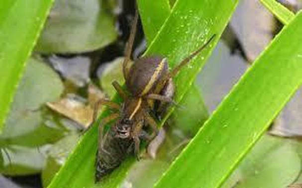 Diễn đàn rao vặt tổng hợp: Những loài côn trùng có ích bà con nông dân nên biết 3O72id_7JB_7FoKaFN2djDj_z3d4TAY7Ri18a4j8YiX2T7qPa2FlNWdRysz86J4axSJlQFVq6TqCIy2FlfS-psfL-hNJYZ7-6S4xWEbL84HmwXUbGDryIUPUTDnfVMdS_FOtPPEt