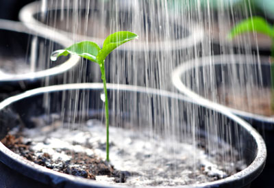 Can Weeds Grow in Potted Plants