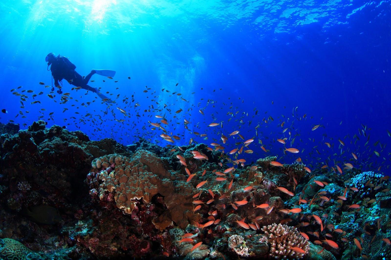 加入沖繩浮潛行程更可漫遊海中欣賞絕美七彩珊瑚礁,甚至與彩色熱帶魚群共舞。