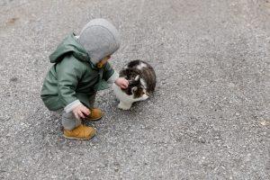 A toddler petting a cat.