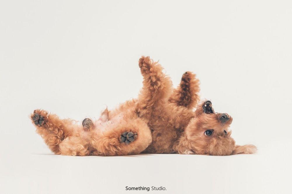 三牲工作室 寵物攝影 毛孩 領養