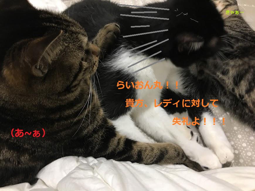 成功する猫のダイエット方法!太らせない対策と4つのポイント