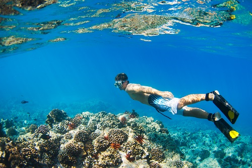 Check out life under the sea while snorkeling.