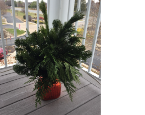 Complements and completes the holiday decoration for any entry (pot not included)