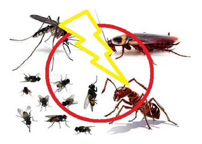 Diệt côn trùng – giải pháp loại bỏ nỗi lo mầm bệnh nên làm