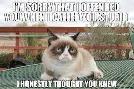 Image result for grumpy cat meme sorry I offended you