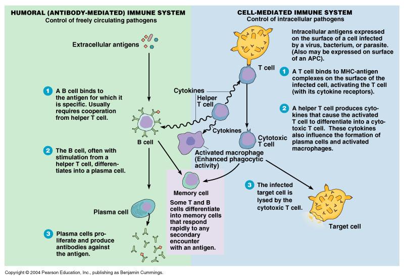 antigens and antibodies relationship quiz