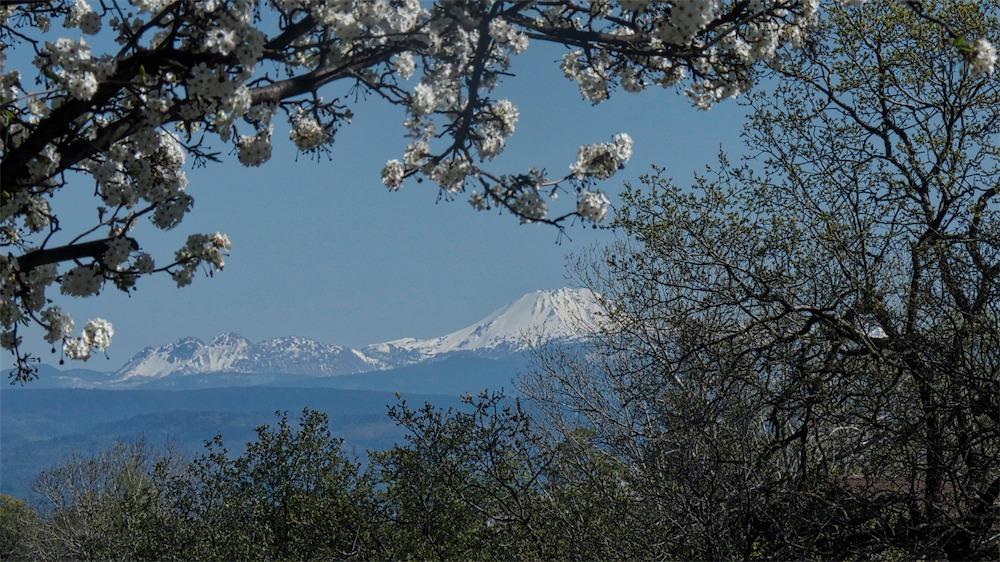 Blossom Framed Lassen.jpg