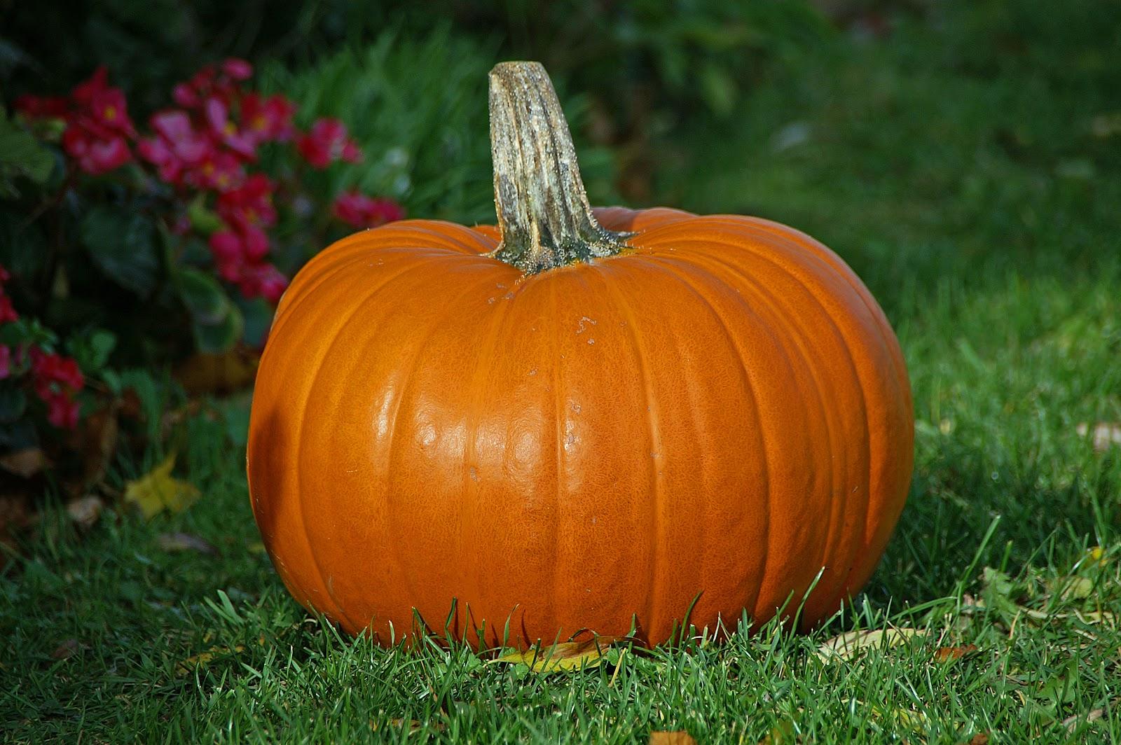 File:Pumpkin.jpg - Wikimedia Commons