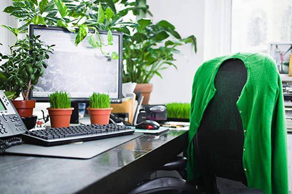 Cây phong thủy trên bàn thu ngân để tăng vượng khí cho cửa hàng