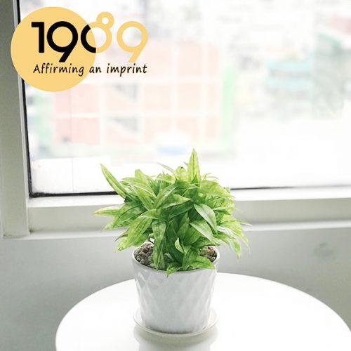 Top 40+ Loại Cây Cảnh Trồng Trong Nhà, Văn Phòng HOT Nhất Hiện Nay