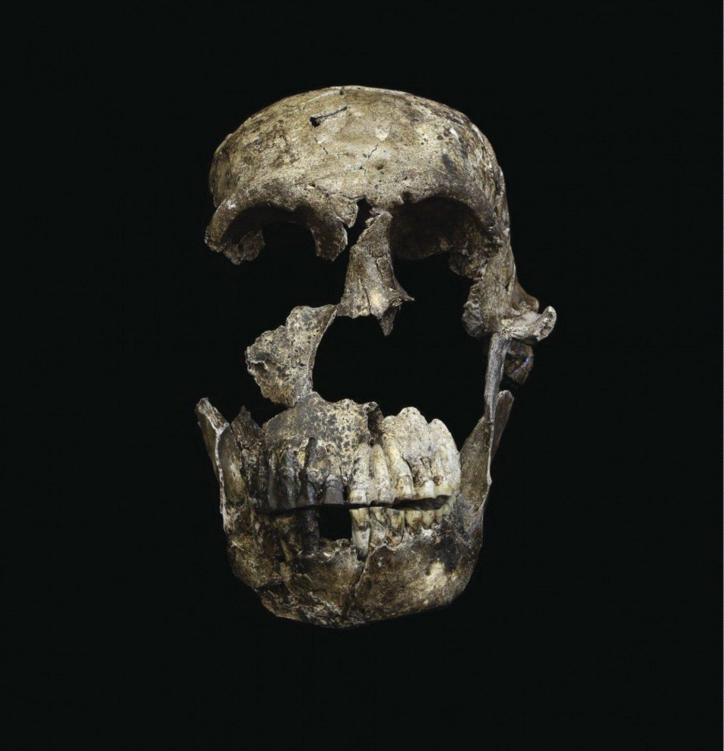 """Crânio """"Neo"""" do Homo naledi da Câmara Lesedi.  (John Hawks / Universidade de Witwatersrand)"""