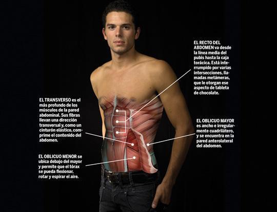 Resultado de imagen de músculos abdominales y el periné