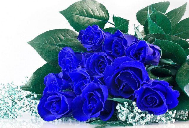 hoa hong xanh co that khong