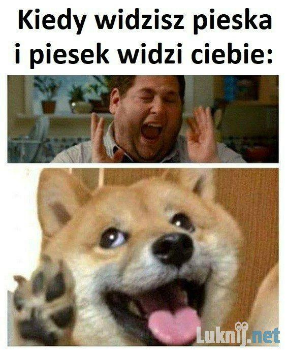powitanie psa