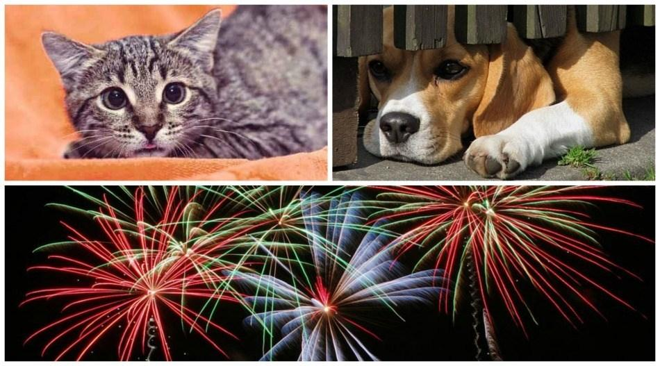 dog cat and fireworks
