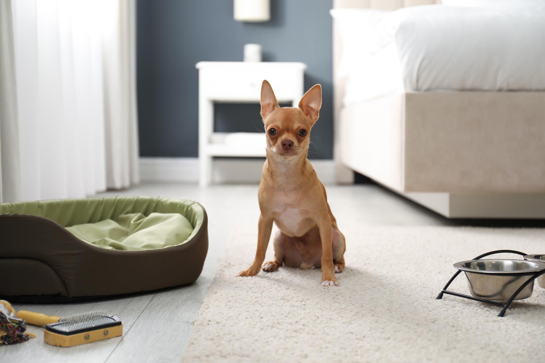 Alojamiento dog friendly