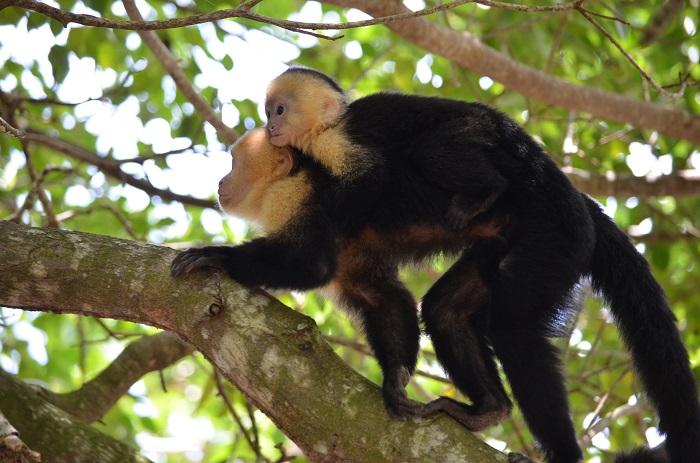 Conoce la Isla de los Monos en Iquitos