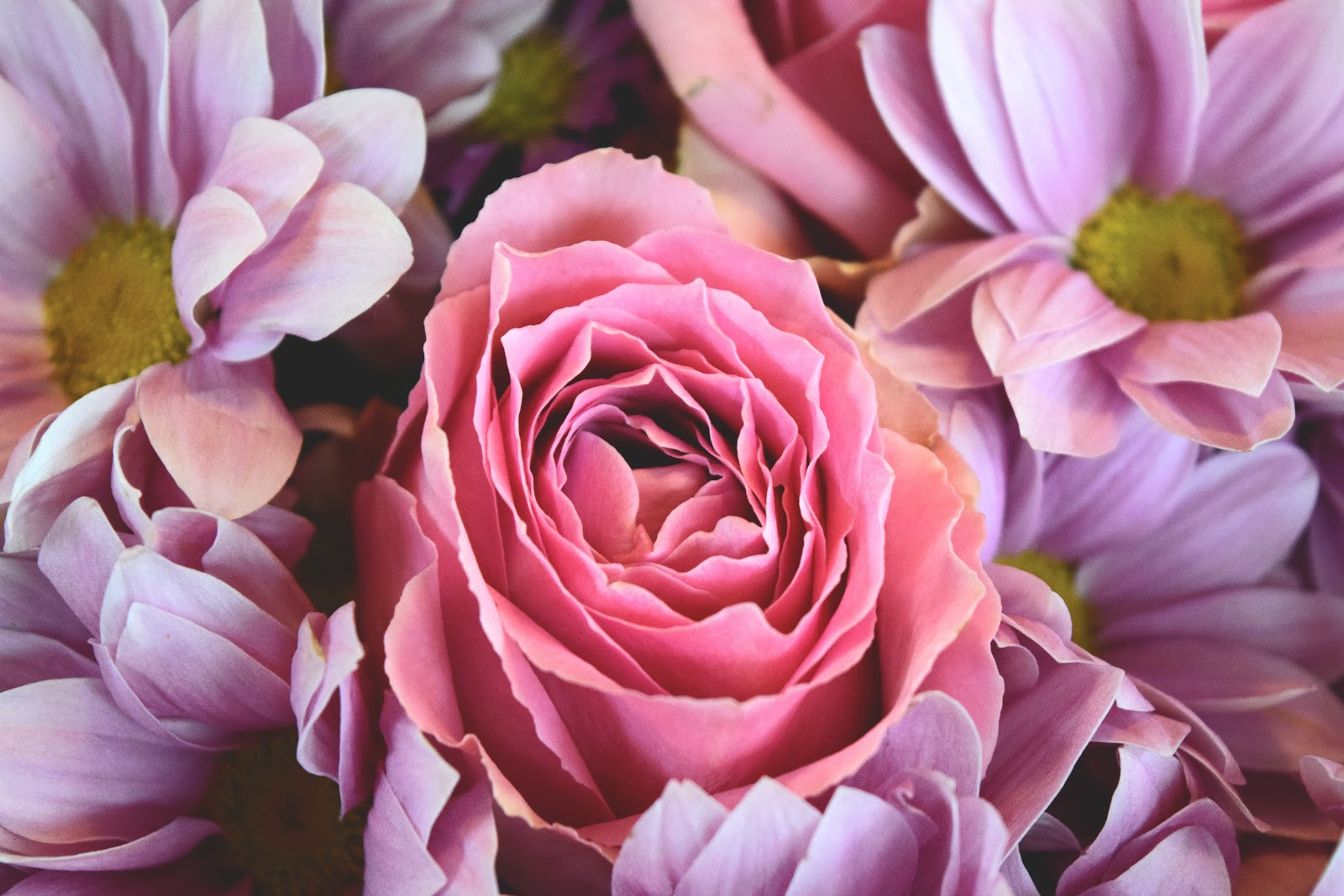 flowers-love-roses-pink-rose.jpg