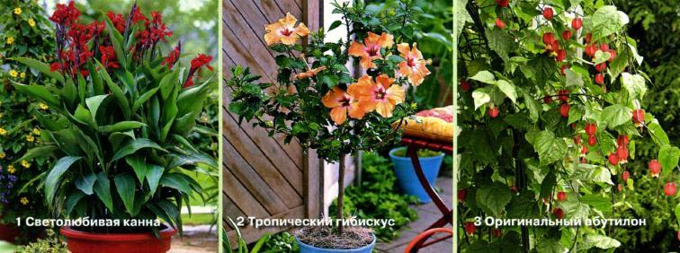 Экзотические цветы на балконе в горшках и контейнерах