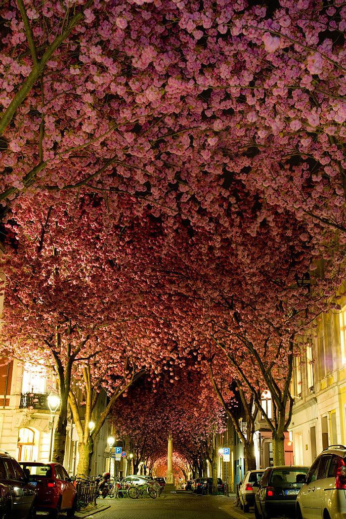 con đường rợp bóng hoa