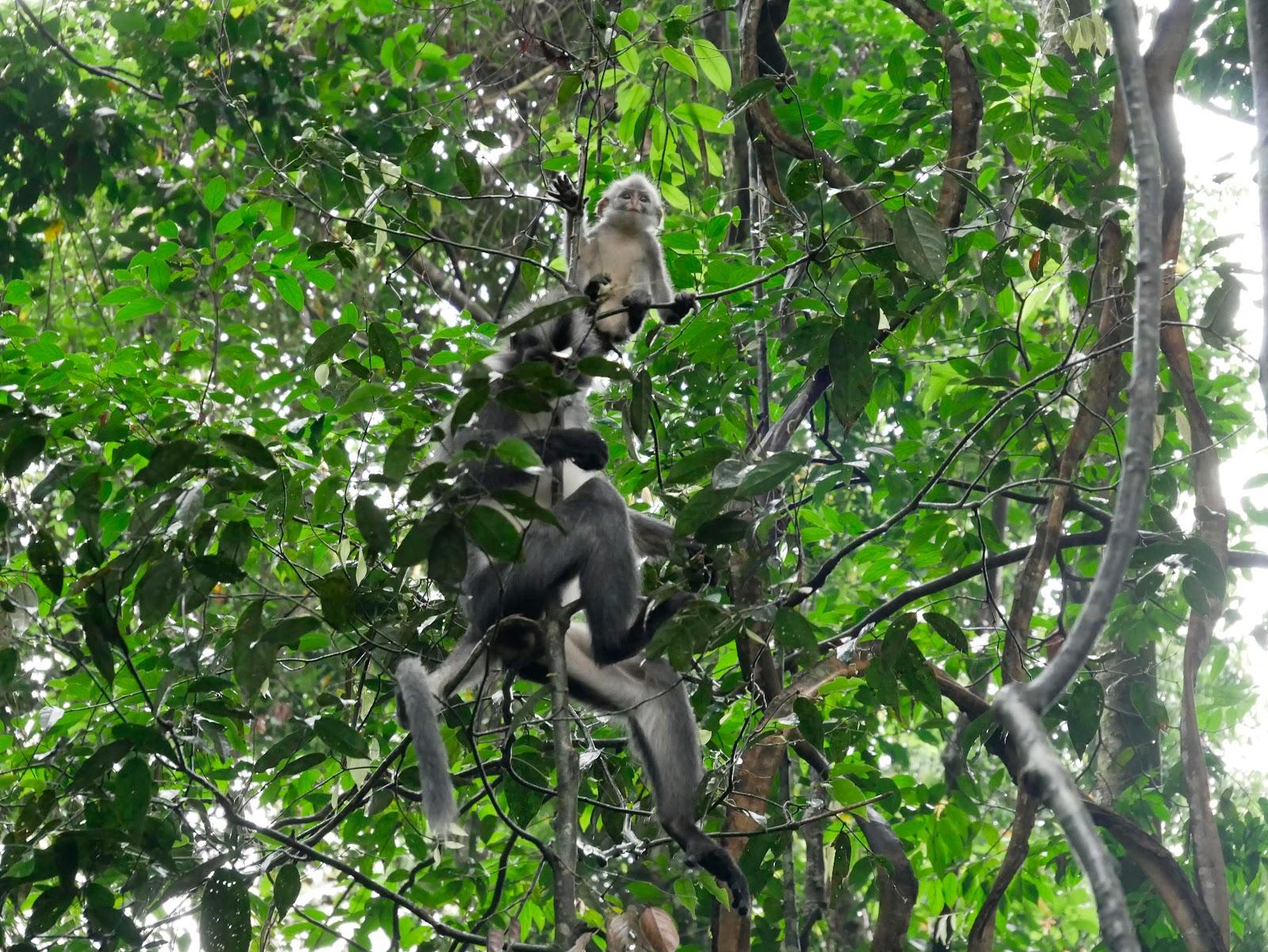 animales del trekking de bukit lawang