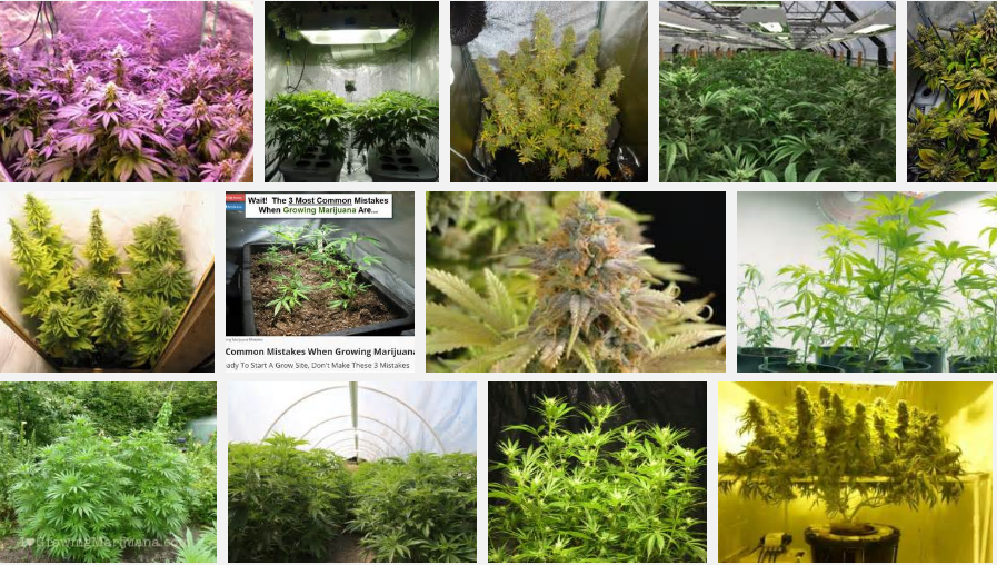 the science of growing weed