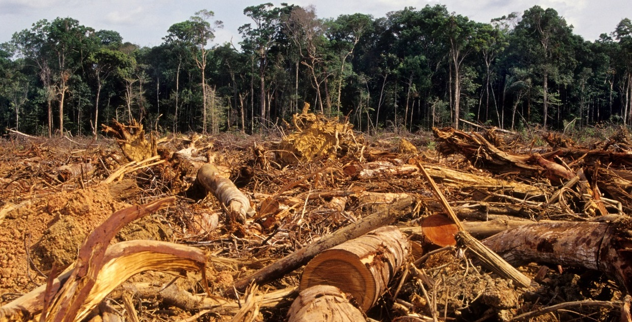 Deforestation Drives Disease, Climate Change and It's Happening at a Rapid  Rate