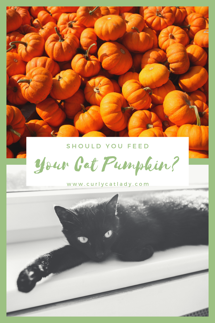 Should You Feed Your Cat Pumpkin?