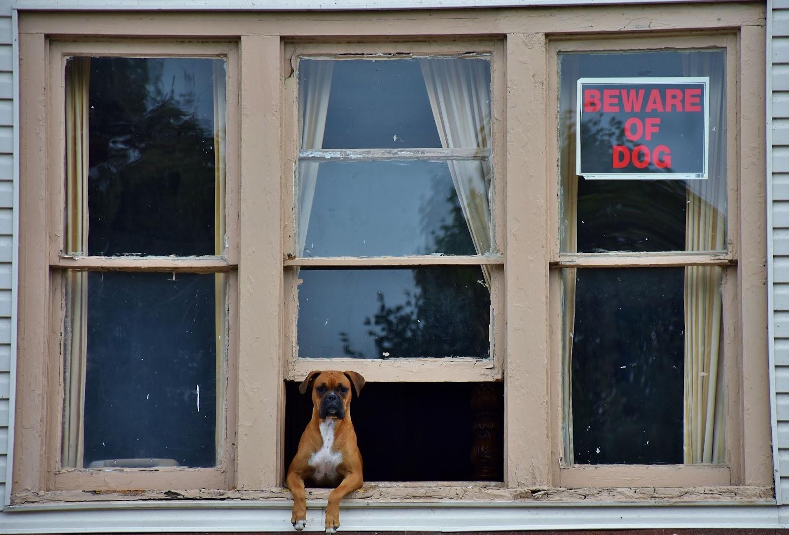 security dog insurance