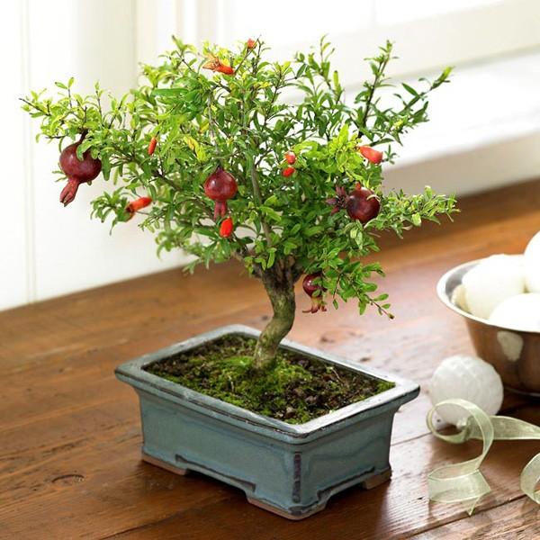 18 mẫu chậu cây cảnh mini cực xinh trang trí cho nhà đón Tết 1