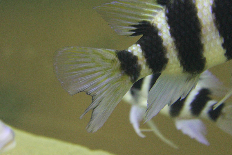 How To Tell If Aquarium Fish Are Stressed: And How To Help 2