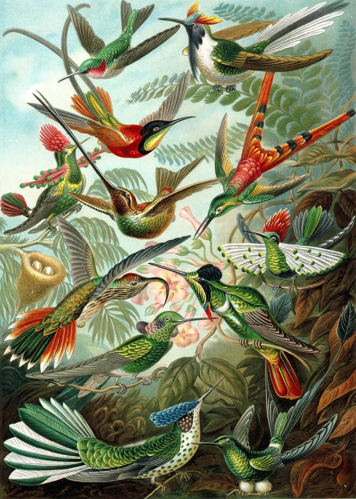 https://sites.google.com/hdsb.ca/maheshwari-biology/home/diversity-of-living-things