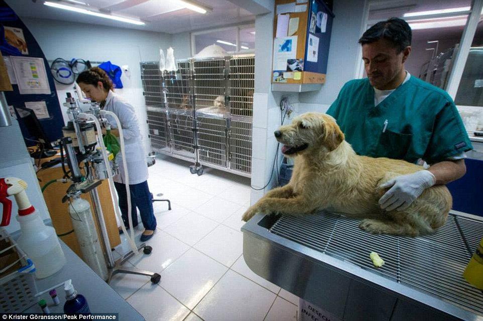 Vétérinaire en Equateur pour Arthur