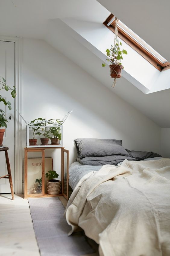 Botanical Garden in an Attic Bedroom