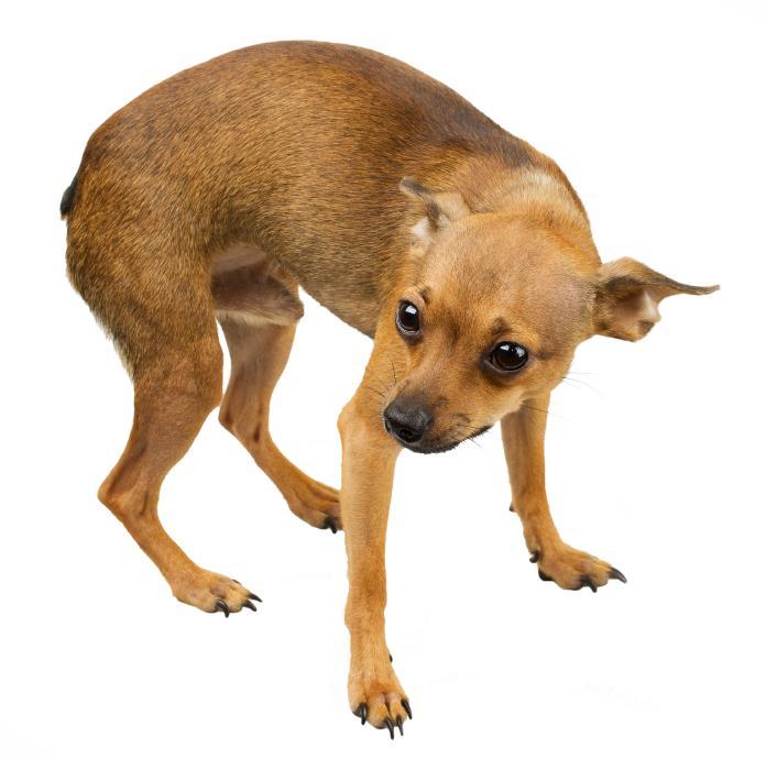 O que fazer com um cão medroso adotado