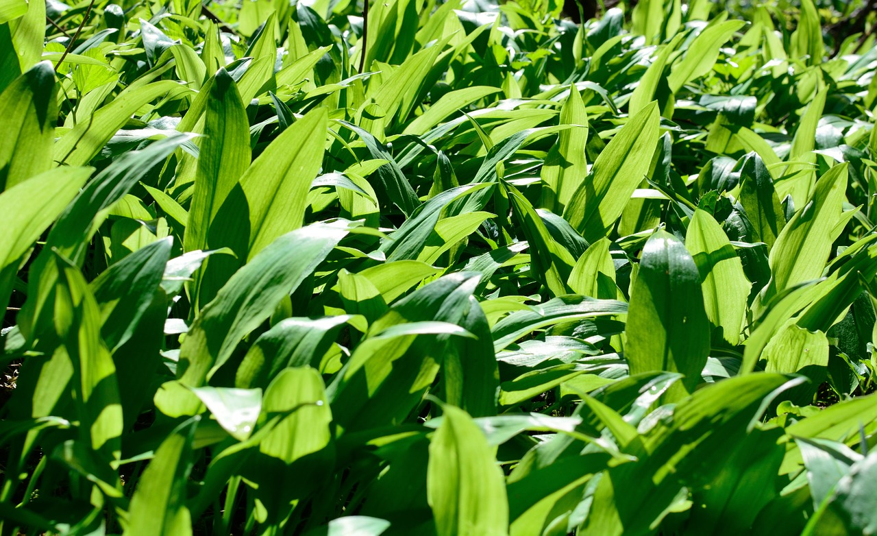 How Many Different  Types of Crabgrass Are There?
