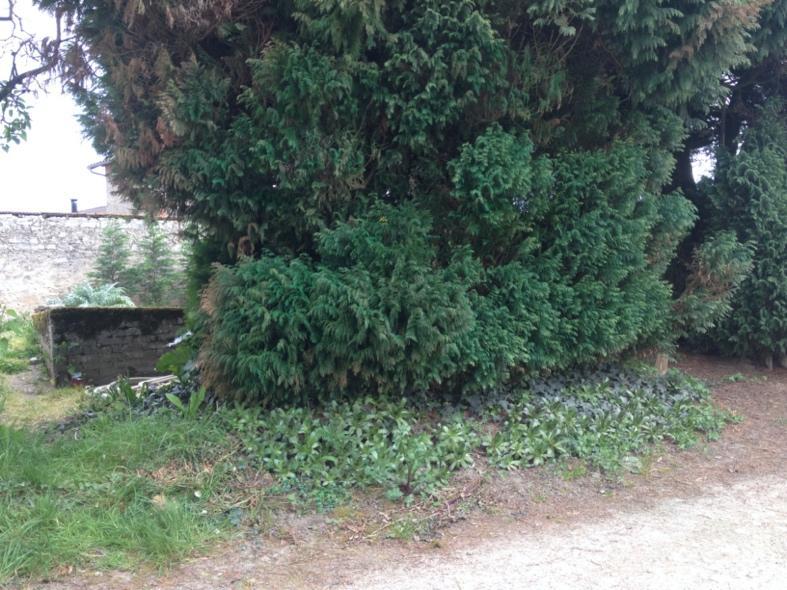 Une image contenant extérieur, herbe, arbre, chemin  Description générée automatiquement