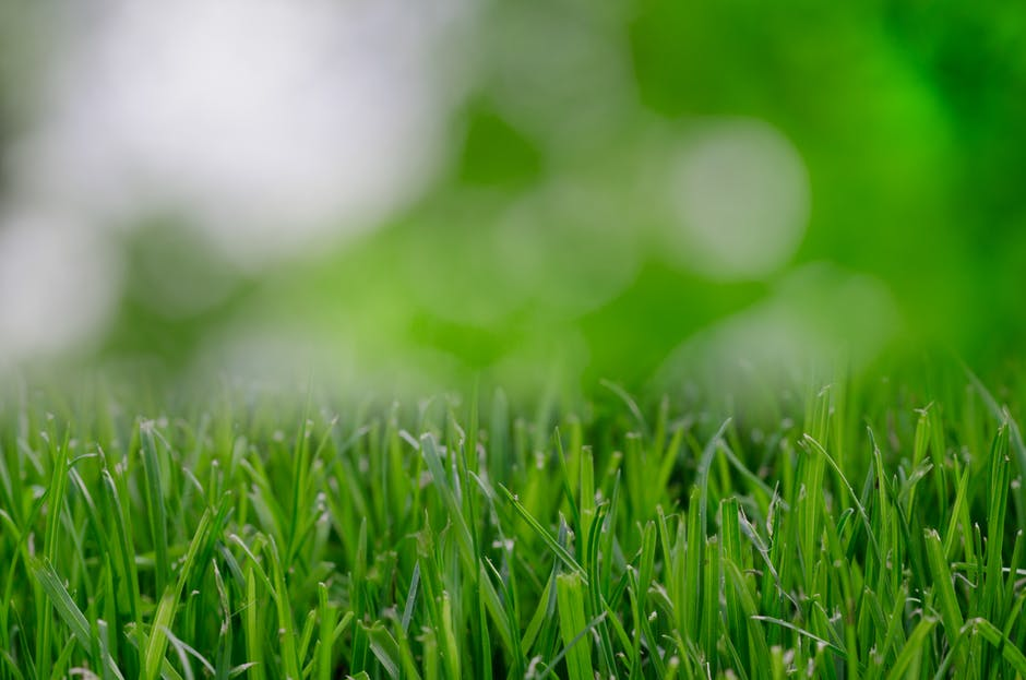 blur, blurred, eco