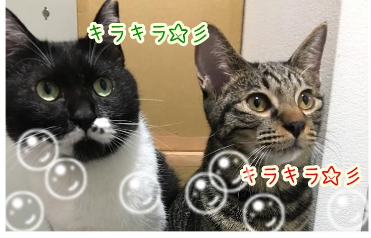 猫は成長につれて目の色が変化する!4つの目の種類について