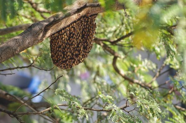 https://savedbydesign.files.wordpress.com/2021/08/beehive-3.jpg?w=600