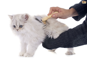 How to get Wax out of Cat Hair