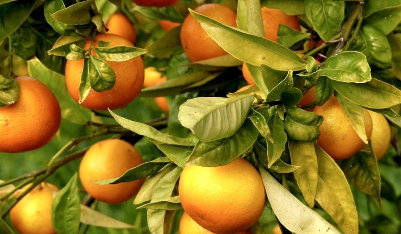 mandarinas-14-01-2008-001-13-large[1]