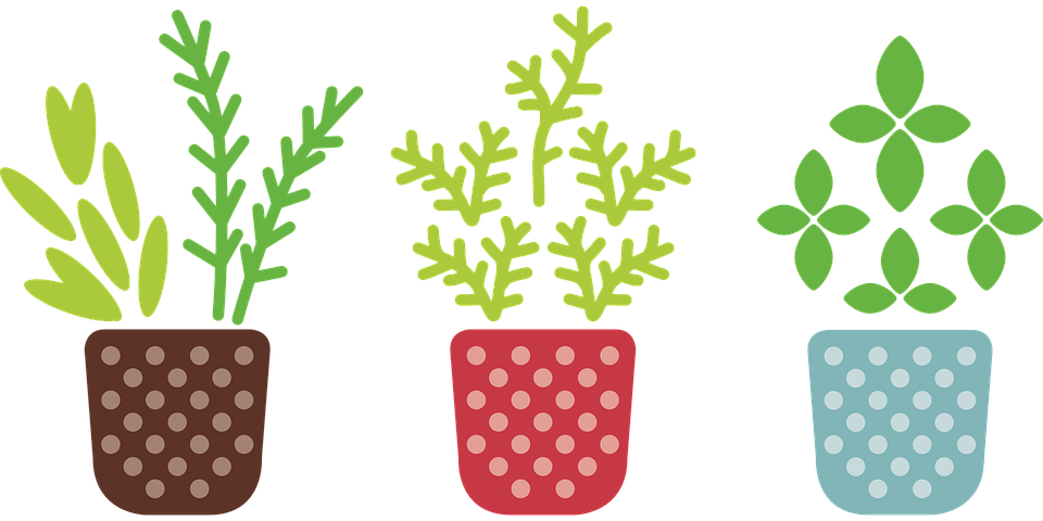 Erva, Pote, Planta, Crescer, Jardim, Flor, Especiaria